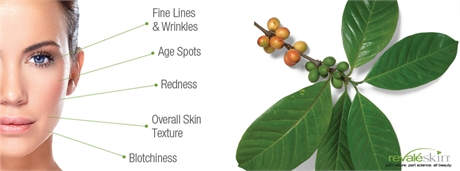 Revale Skin CoffeeBerry